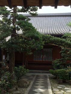 Kyoto tree training