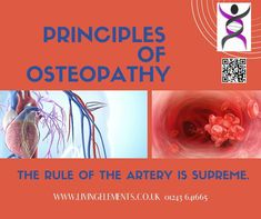 The circulation in the body - major vessels, heart and the periphery is of supreme importance to how well the body is able to function and stay healthy. Osteopaths Gayle Palmer D.O. and Elizabeth Evans BSc(Ost) discuss this in more detail. Please click the clink to find out more - and share wildly! #OsteopathyWorks