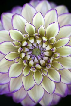 Dalia-idealna symetria. Dhalia - symmetry in everything.