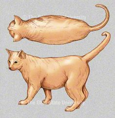 Is your cat over-, under-, or normal-weight?