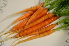 Bambino Carrot