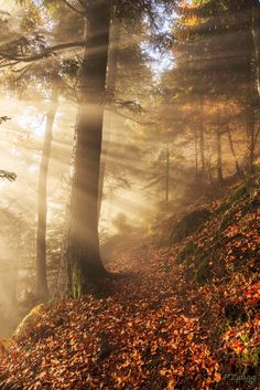 jeux de lumière en forêt