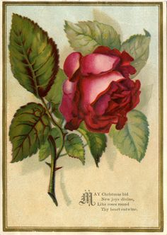 victorian cards | Victorian Images - Beautiful Red Rose - The Graphics Fairy