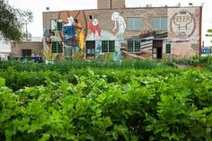 Chicago, Illinois In Chicago—where industrial blight is common—a former meat-packing plant is breathing new life into its surroundings as it transforms into a successful indoor vertical farm that also serves as a food-business incubator. Appropriate Technology, Modern Agriculture, Meat Packing, Beer Company, Sustainability, Chicago, King Lear, Plants, Painting