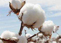 Glossaire des fibres textiles, définitions, faits et chiffres