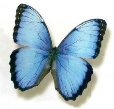 This butterfly is one of my favorite things. Love.