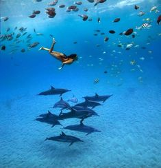 Swimming amongst schools of fish and dolphins