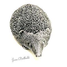 Workshop, Owl, Bird, Animals, Lucerne, Sculptures, Kunst, Atelier, Animales
