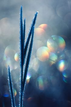 Frozen Grass by JoniNiemela on DeviantArt