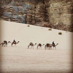 Camel caravan in Wadi Rum returning back home from long day navigating the dunes Wadi Rum Tours, The Dunes, Camels, Nature Reserve, Back Home, Caravan, Trekking, Jordans, Hiking