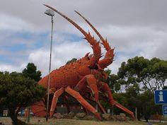 A fisherman's pet lobsters.