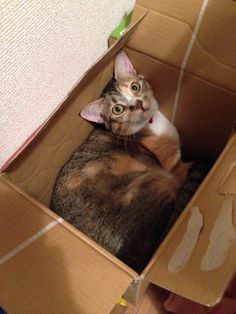 Kemi in the box