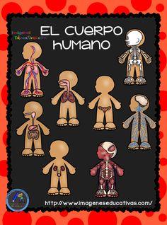 El Cuerpo Humano; Aparatos y Sistemas para Primaria Un ser vivo, también llamado organismo, es un conjunto de células que forman una estructura muy organizada y compleja, en la que intervienen sistemas de comunicación...