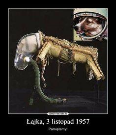 Łajka, 3 listopad 1957 – Pamiętamy! Mish Mash, Funny Kids, Funny Photos, Aliens, Oreo, Creepy, Funny Memes, Challenges, Kawaii