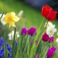 What happens in March in the garden? Discover which flowers will be blooming, what jobs to do in the March garden, and what to plant.    After the...