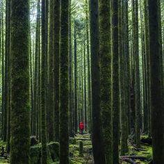 Golden Ears Provincial Park near Vancouver, BC    (Photo: @michaelmatti via Instagram) #exploreBC #explorecanada