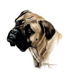 BULLMASTIFF Dog Art Print Signed by Artist DJ Rogers. $12.50, via Etsy.