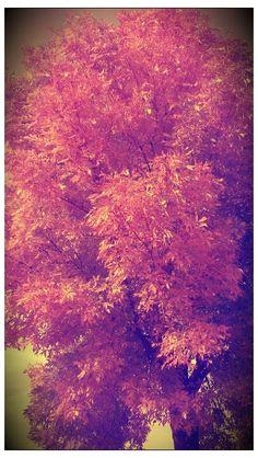 Autumn in Iowa.