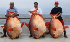 Opah world record catch.
