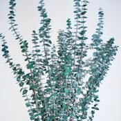Preserved Eucalyptus Branches For Sale - Green Single Bunch - Green by Curious Country Creations