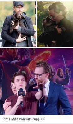 Tom Hiddleston with puppies