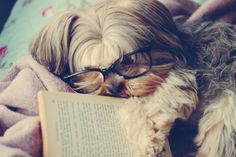 Prettybooks, one of my favorite reading blogs. #book #lit