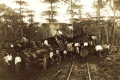 Museu Ferroviário Virtual - Acidente ferroviário e mata de araucárias no interior de SC, por volta de 1910