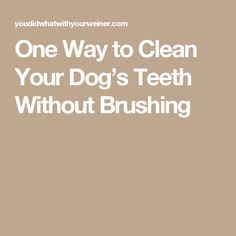 UPDATED: I Don't Brush My Dog's Teeth. I Do This Instead to help keep their teeth clean - a home routine plus anesthesia-free doggy dental cleaning. Coconut Oil For Dogs, Dog Teeth, Dog Rules, Teeth Cleaning, Brushing, Fur Babies, Dental, Your Dog, Pets
