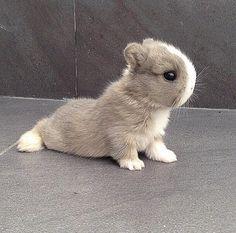 Doing some bunny yoga