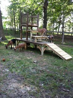 The Jungle Jim play ground for all our pigmy goats at Wildwood Retreat. Built Designed by Denny White~ Zionsville, In. Dog Backyard, Backyard Farming, Backyard Landscaping, Pigmy Goats, Goat Playground, Backyard Playground, Goat Shelter, Raising Goats, Keeping Goats