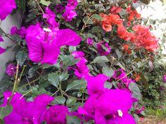 Color del jardin