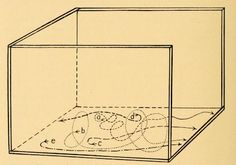 """nemfrog 