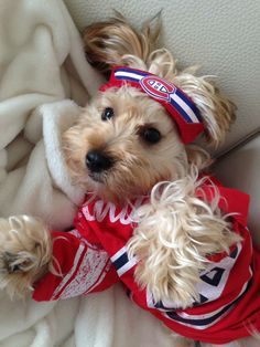 Soumis par / Submitted by Alessandra Rosanio Taddei (Facebook) Funny Animal Pictures, Funny Animals, Cute Animals, Montreal Canadiens, Dog Football, Fans, Hockey Teams, Dexter, Sports