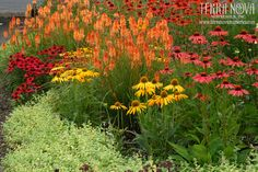 Terra Nova Nurseries® Garden