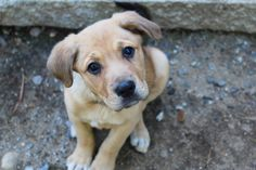 Raven in NH is an adoptable Retriever searching for a forever family near New Boston, NH. Use Petfinder to find adoptable pets in your area.