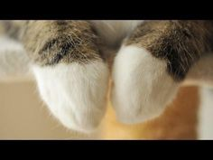 Skillful Forefoot of Maru - Life With Cats Animals And Pets, Cute Animals, Youtube Cats, Funny Prank Videos, Exotic Shorthair, Fancy Cats, Matou, Curious Creatures, Cat Paws