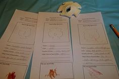 Toddler Preschool Beach Ocean Theme Ideas -1  It my turn in the rotation for Tot School so here are 6 ideas.    Day One!    Sand Dollar Discovery    I made lab sheets, for them to document what they saw.  If you want a copy email me or leave a comment with your email address.    I had a sand dollar from when we went to California last time and pulled out my kid sized Magnifying Glass.    We talked about what a Sand Dollar is:      The sand dollar is a marine invertebrate, a living animal, clo...