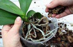 Green Beans, Vegetables, Tropical, Beauty, Gardening, Books, Gardens, Tape, Nature