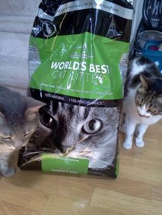 #worldsbestcat We love World's Best Cat litter. No dust, easy on my allergies, and the cats love it! Just in case...