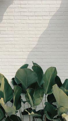 Le plus à jour Photos plantes background Suggestions Wallpaper Pastel, Flower Background Wallpaper, Plant Wallpaper, Framed Wallpaper, Aesthetic Pastel Wallpaper, Green Wallpaper, Aesthetic Wallpapers, Wallpaper Backgrounds, Phone Backgrounds