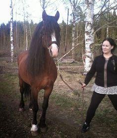 DJURSKYDDSINSPEKTÖRERNA VÄSTRA GÖTALAND LÄN: STULNA Travhingsten Knotteman hittad i samma län h...