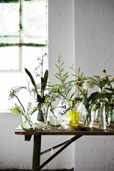 plants and glass at home