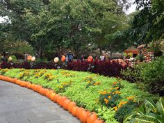 Along with the pumpkins that are out, the flowers at the Dallas Arboretum burst with new color during autumn!