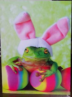 happy easter froggy style.