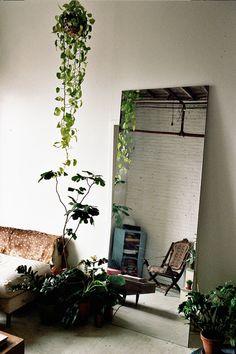Plants + white walls