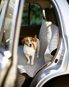 Tips for traveling with pets
