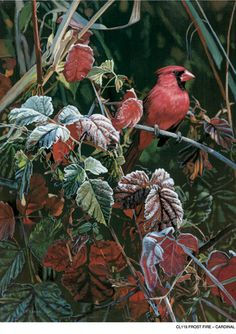 Frost Fire- Cardinal  by Terry Isaac