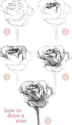How to Draw a Flower | how-to-draw-a-rose-with-a-heart-step_2.jpg