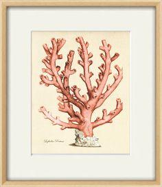 Sea coral art print vintage Nautical art print by AntiqueWallArt