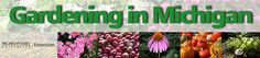Gardening in Michigan. This website highlights the resources at Michigan State University for gardeners. Our advice is based on science performed at MSU or other land grant universities.